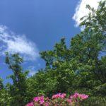 空と木とつつじの写真