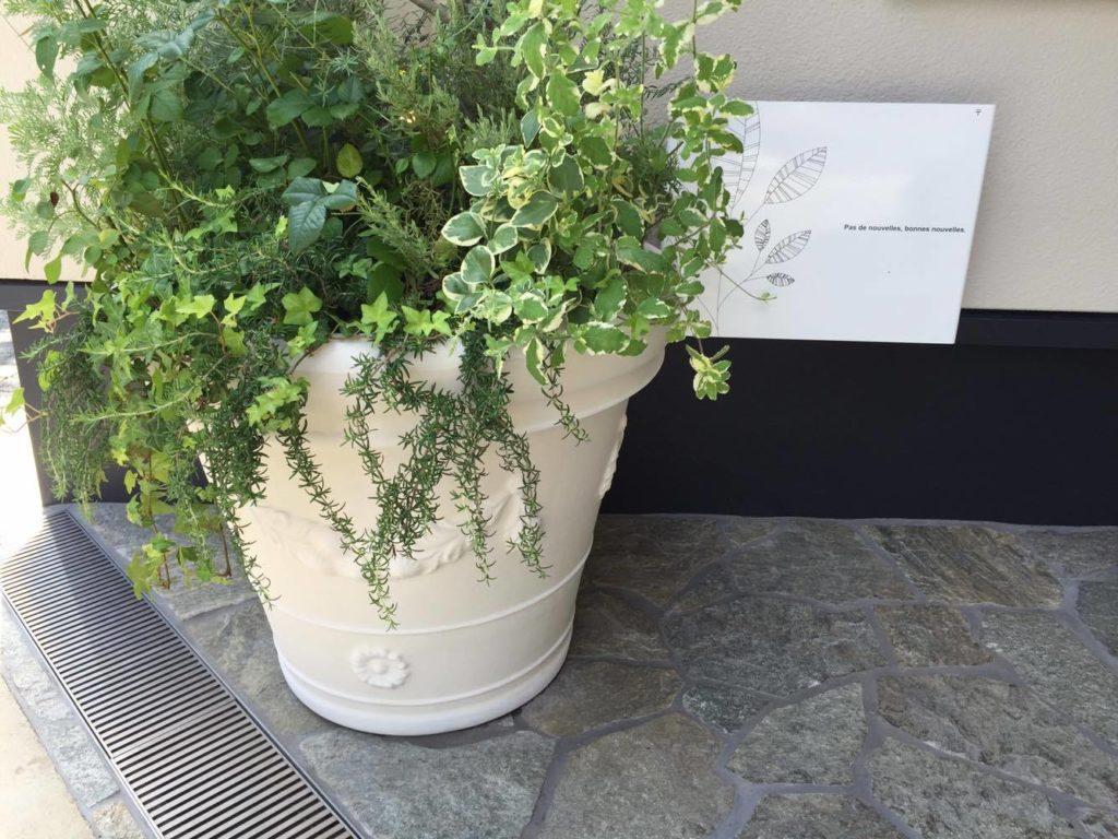 玄関入口の植物