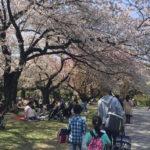 花見客でにぎわう小石川植物園